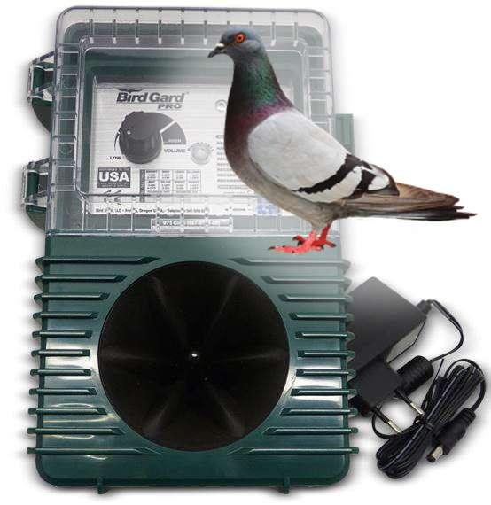 Gard Pro pigeon