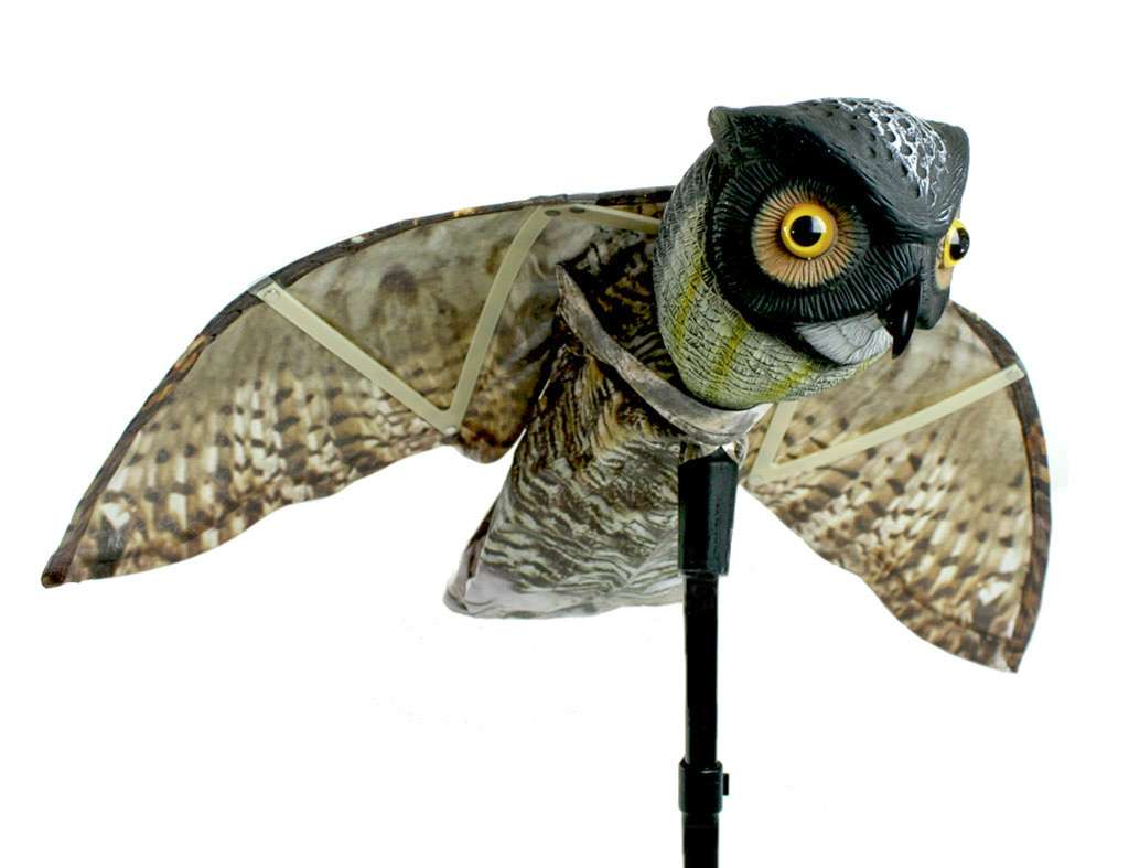 Prowler Owl-4