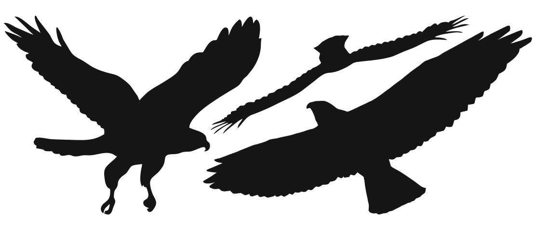 lindude_siluetid