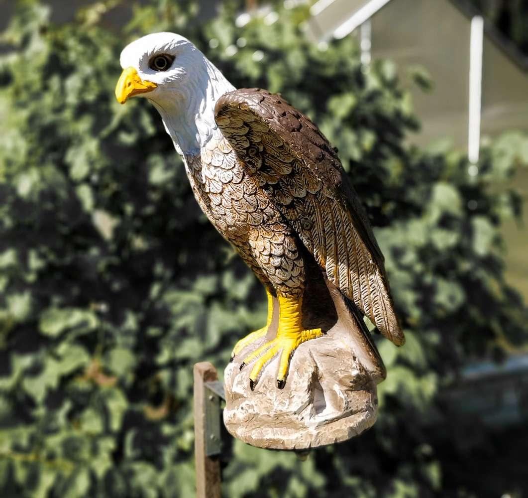 birds scarer eagle-6